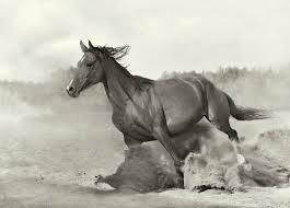 20150119140957-caballo.jpg